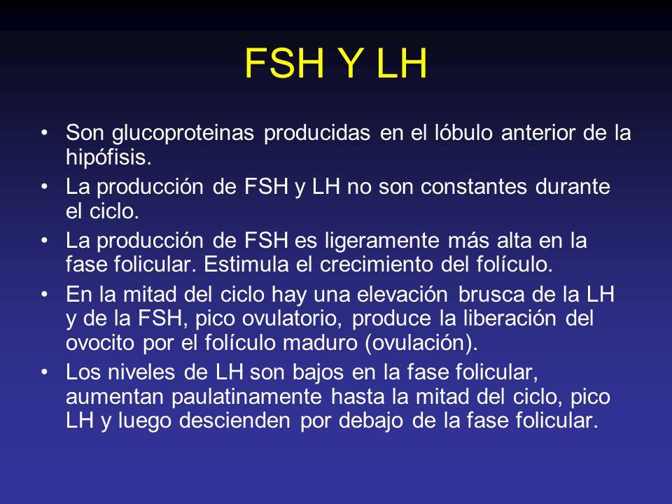 FSH Y LH Son glucoproteinas producidas en el lóbulo anterior de la hipófisis. La producción de FSH y LH no son constantes durante el ciclo. La producc