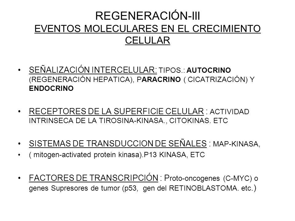 REGENERACIÓN-III EVENTOS MOLECULARES EN EL CRECIMIENTO CELULAR SEÑALIZACIÓN INTERCELULAR: TIPOS.: AUTOCRINO (REGENERACIÓN HEPATICA), PARACRINO ( CICATRIZACIÓN) Y ENDOCRINO RECEPTORES DE LA SUPERFICIE CELULAR : ACTIVIDAD INTRINSECA DE LA TIROSINA-KINASA., CITOKINAS.
