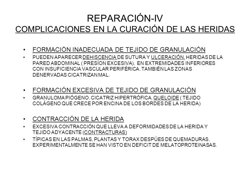 REPARACIÓN-IV COMPLICACIONES EN LA CURACIÓN DE LAS HERIDAS FORMACIÓN INADECUADA DE TEJIDO DE GRANULACIÓN PUEDEN APARECER DEHISCENCIA DE SUTURA Y ULCERACIÓN.