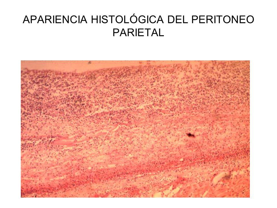 APARIENCIA HISTOLÓGICA DEL PERITONEO PARIETAL