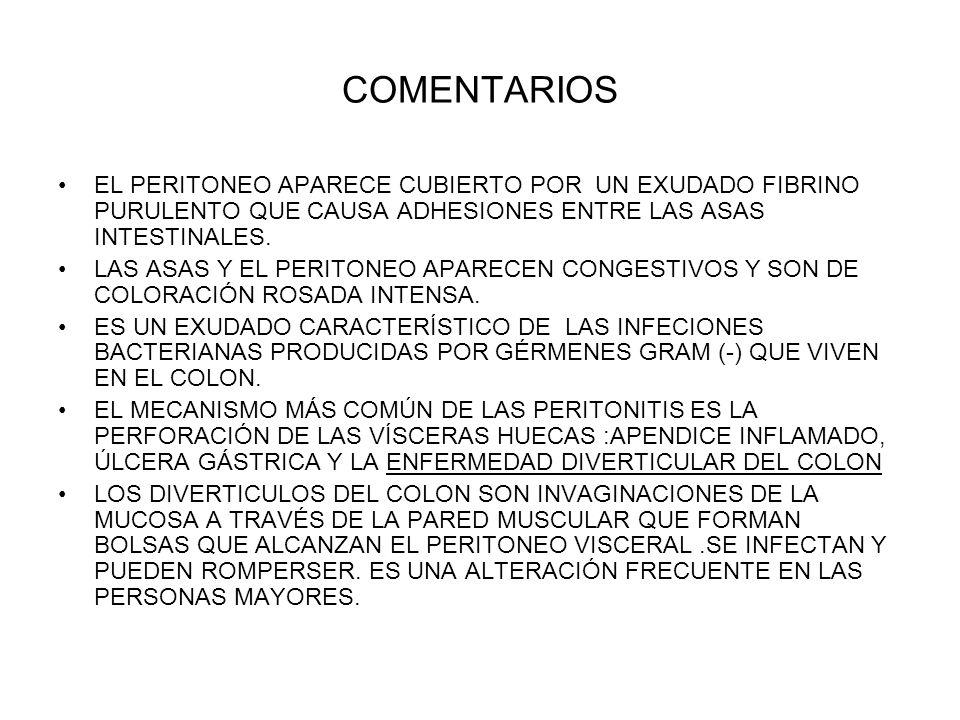 COMENTARIOS EL PERITONEO APARECE CUBIERTO POR UN EXUDADO FIBRINO PURULENTO QUE CAUSA ADHESIONES ENTRE LAS ASAS INTESTINALES. LAS ASAS Y EL PERITONEO A