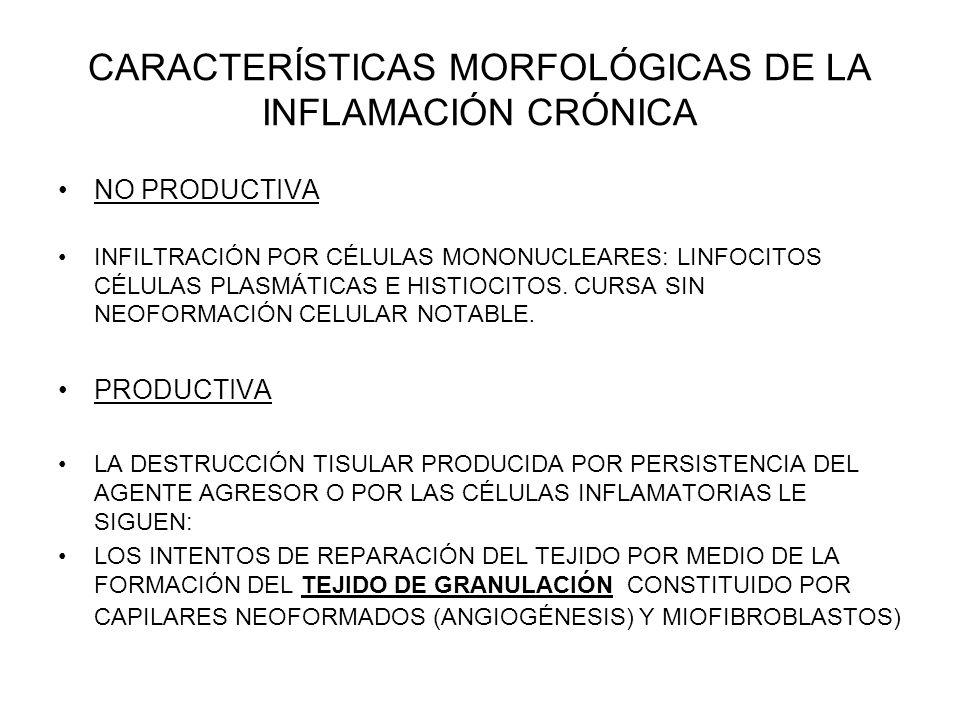 CARACTERÍSTICAS MORFOLÓGICAS DE LA INFLAMACIÓN CRÓNICA NO PRODUCTIVA INFILTRACIÓN POR CÉLULAS MONONUCLEARES: LINFOCITOS CÉLULAS PLASMÁTICAS E HISTIOCI