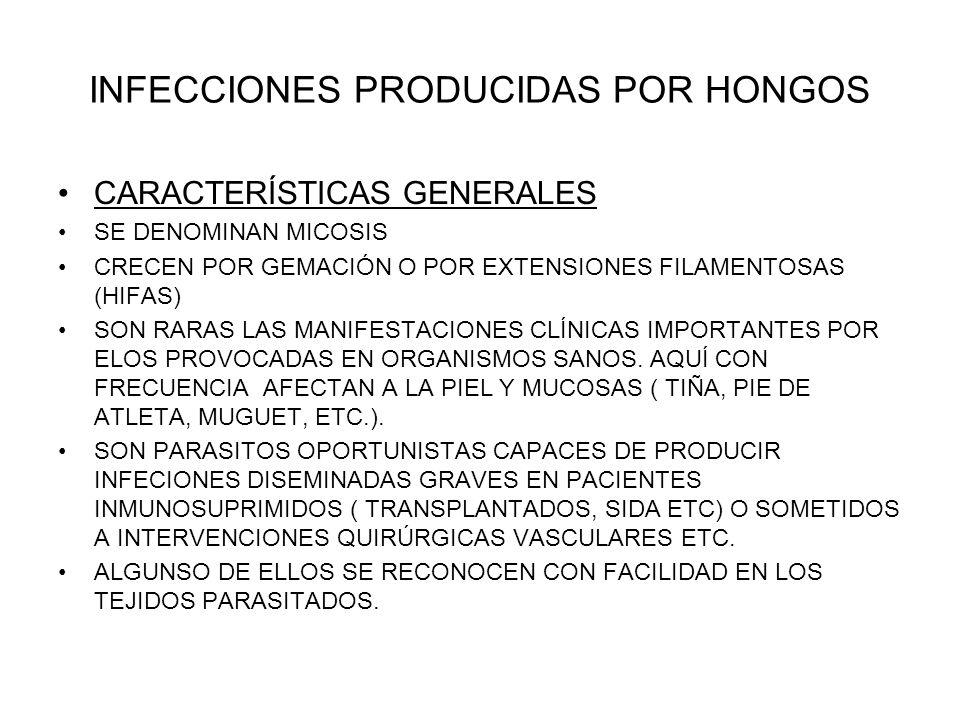 INFECCIONES PRODUCIDAS POR HONGOS CARACTERÍSTICAS GENERALES SE DENOMINAN MICOSIS CRECEN POR GEMACIÓN O POR EXTENSIONES FILAMENTOSAS (HIFAS) SON RARAS