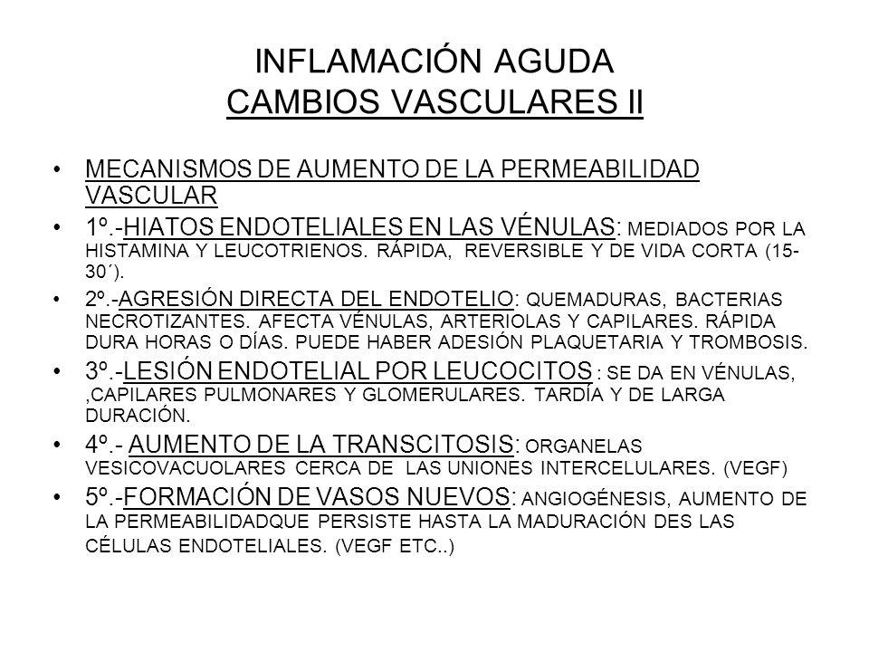 INFLAMACIÓN AGUDA CAMBIOS VASCULARES II MECANISMOS DE AUMENTO DE LA PERMEABILIDAD VASCULAR 1º.-HIATOS ENDOTELIALES EN LAS VÉNULAS: MEDIADOS POR LA HIS