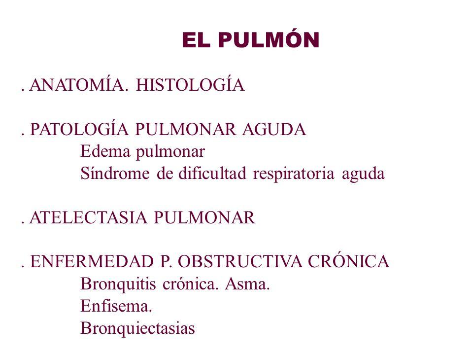 EL PULMÓN. ANATOMÍA. HISTOLOGÍA. PATOLOGÍA PULMONAR AGUDA Edema pulmonar Síndrome de dificultad respiratoria aguda. ATELECTASIA PULMONAR. ENFERMEDAD P