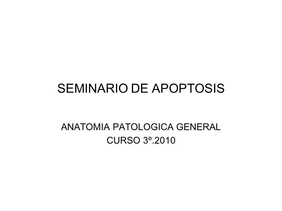 SEMINARIO DE APOPTOSIS ANATOMIA PATOLOGICA GENERAL CURSO 3º.2010