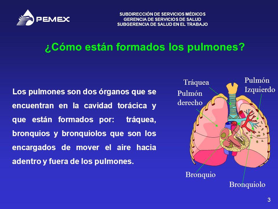 SUBDIRECCIÓN DE SERVICIOS MÉDICOS GERENCIA DE SERVICIOS DE SALUD SUBGERENCIA DE SALUD EN EL TRABAJO 3 ¿Cómo están formados los pulmones? Los pulmones