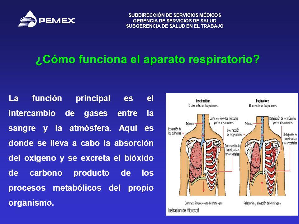 SUBDIRECCIÓN DE SERVICIOS MÉDICOS GERENCIA DE SERVICIOS DE SALUD SUBGERENCIA DE SALUD EN EL TRABAJO 4 ¿Cómo funciona el aparato respiratorio? La funci