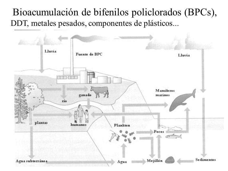 Bioacumulación de bifenilos policlorados (BPCs), DDT, metales pesados, componentes de plásticos...