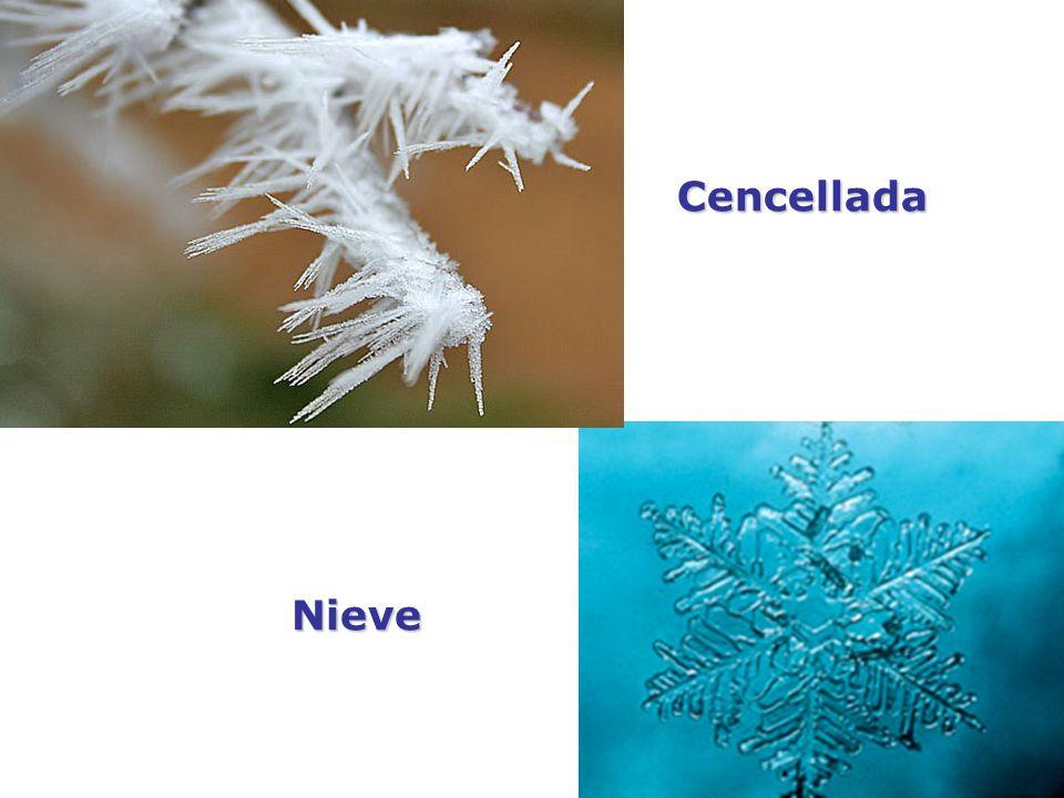 Cencellada Nieve