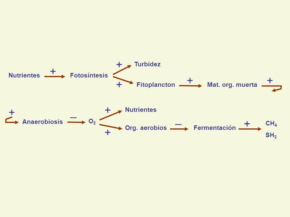 NutrientesFotosíntesis Turbidez FitoplanctonMat. org.