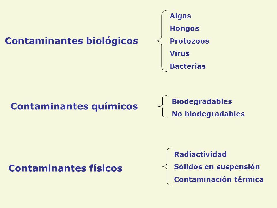 Contaminantes biológicos Contaminantes químicos Contaminantes físicos Algas Hongos Protozoos Virus Bacterias Biodegradables No biodegradables Radiactividad Sólidos en suspensión Contaminación térmica