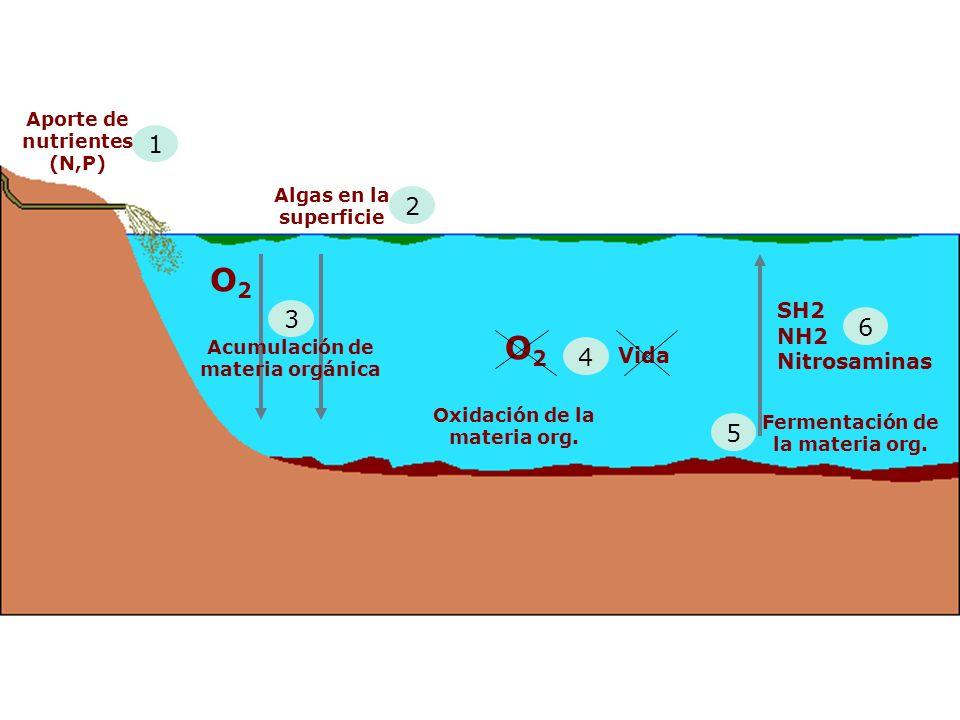 O2O2 2 Algas en la superficie 3 Acumulación de materia orgánica 4 O2O2 Vida Oxidación de la materia org.
