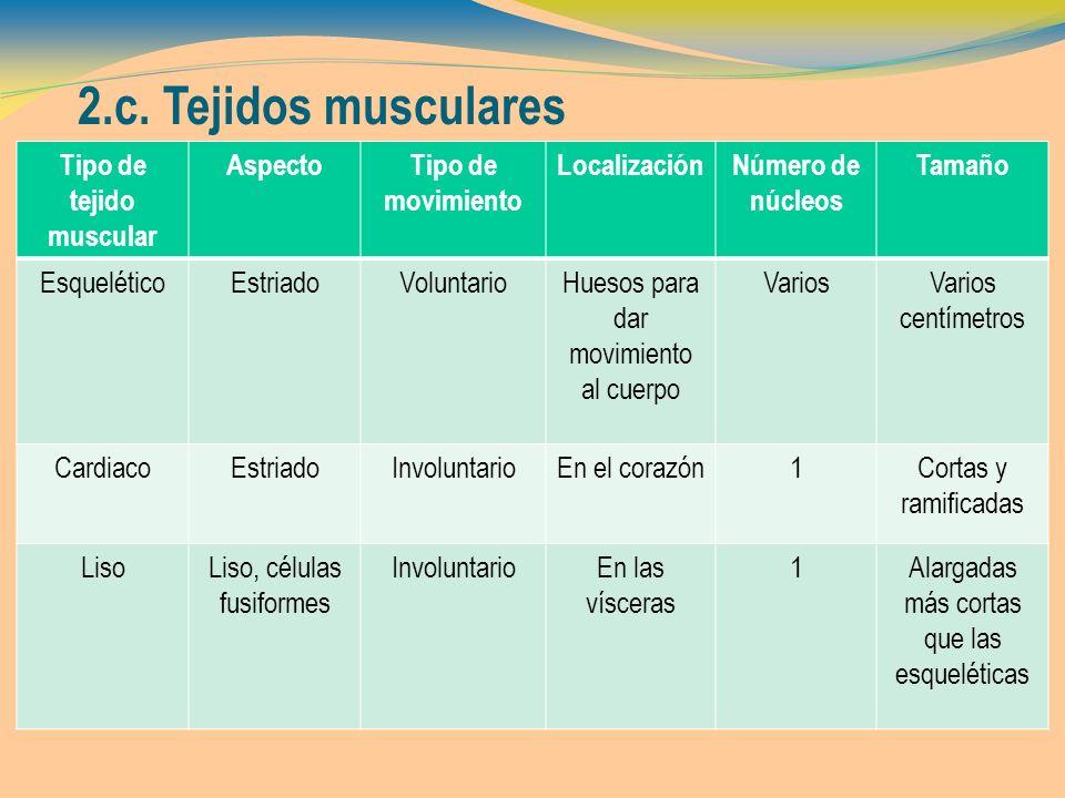 2.c. Tejidos musculares Tipo de tejido muscular AspectoTipo de movimiento LocalizaciónNúmero de núcleos Tamaño EsqueléticoEstriadoVoluntarioHuesos par
