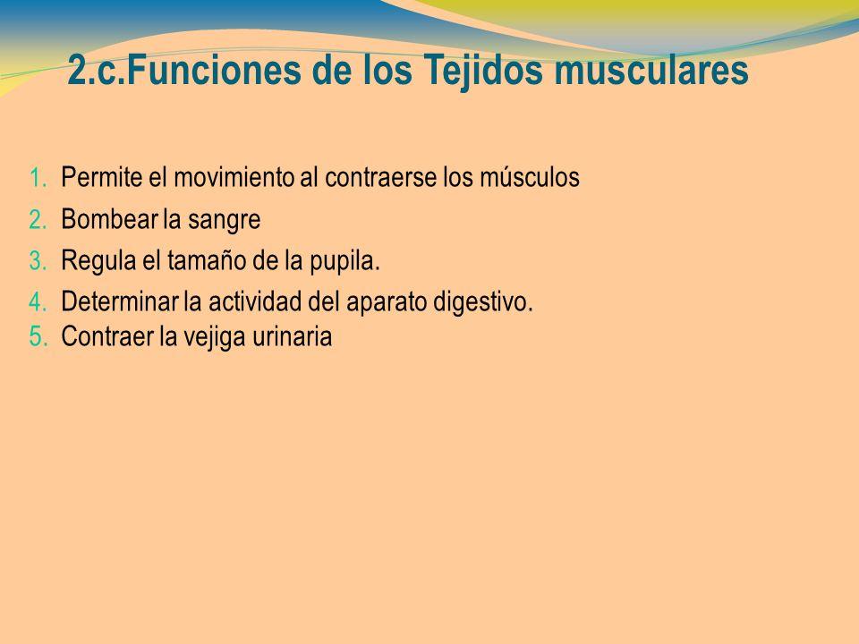 2.c.Funciones de los Tejidos musculares 1. Permite el movimiento al contraerse los músculos 2. Bombear la sangre 3. Regula el tamaño de la pupila. 4.