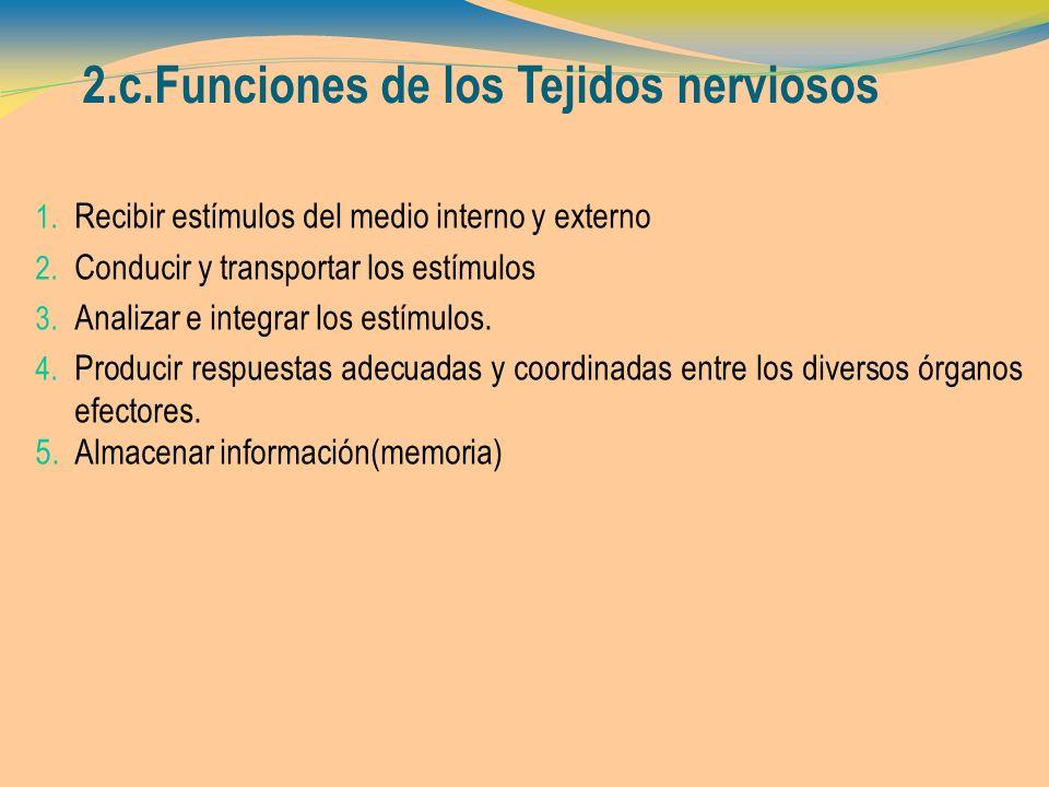 2.c.Funciones de los Tejidos nerviosos 1. Recibir estímulos del medio interno y externo 2. Conducir y transportar los estímulos 3. Analizar e integrar