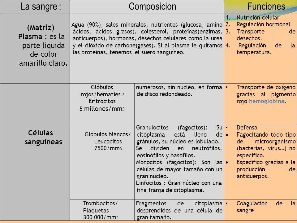 La sangre :ComposicionFunciones (Matriz) Plasma : es la parte liquida de color amarillo claro. Agua (90%), sales minerales, nutrientes (glucosa, amino