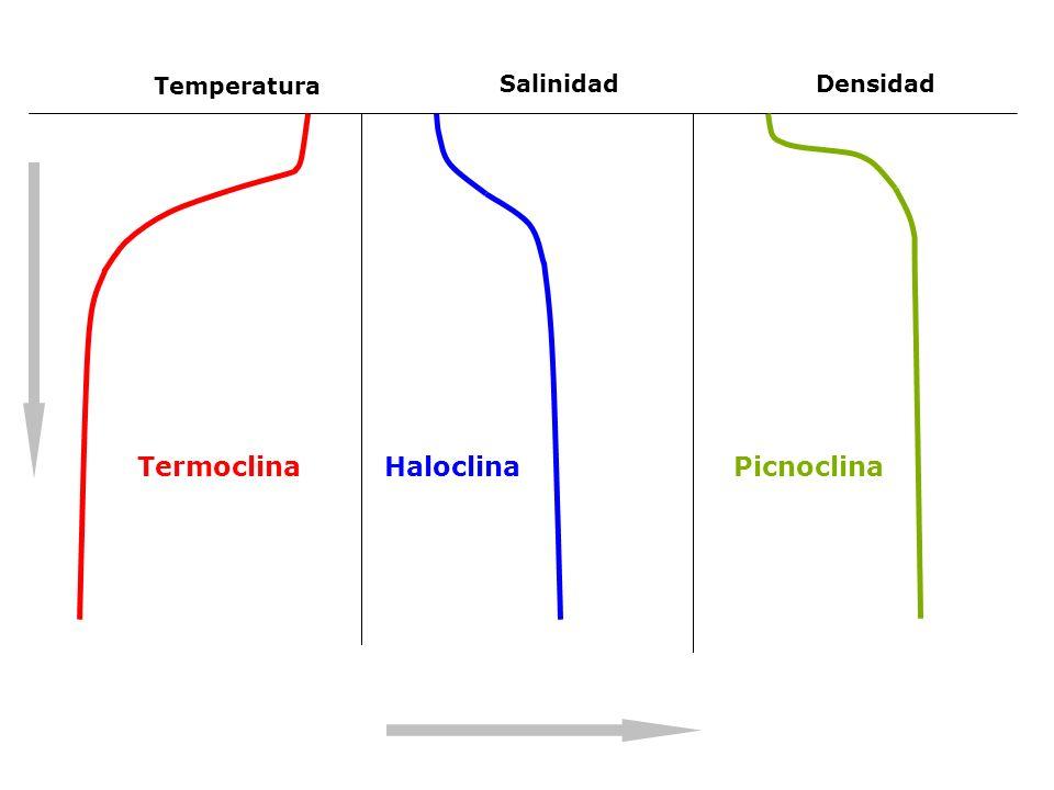Temperatura SalinidadDensidad TermoclinaHaloclinaPicnoclina