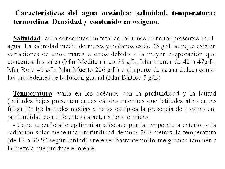 Epilimnion Termoclina Hipolimnion Temperatura Profundidad