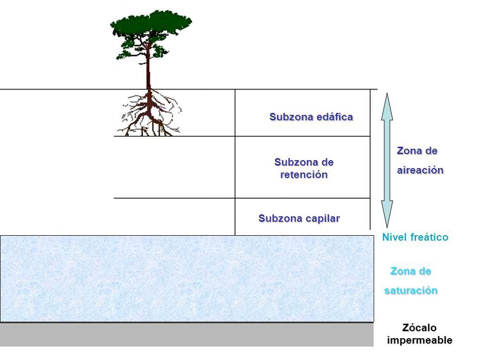 Zona de aireación Aire y agua en los poros Nivel freático El agua llena los poros Zona saturada