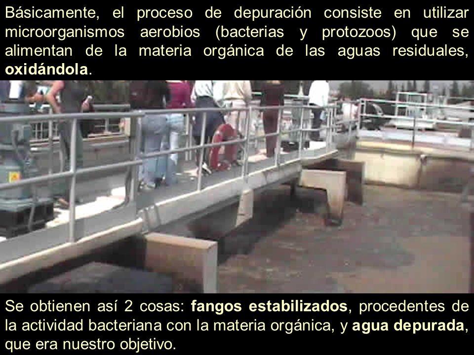 Básicamente, el proceso de depuración consiste en utilizar microorganismos aerobios (bacterias y protozoos) que se alimentan de la materia orgánica de