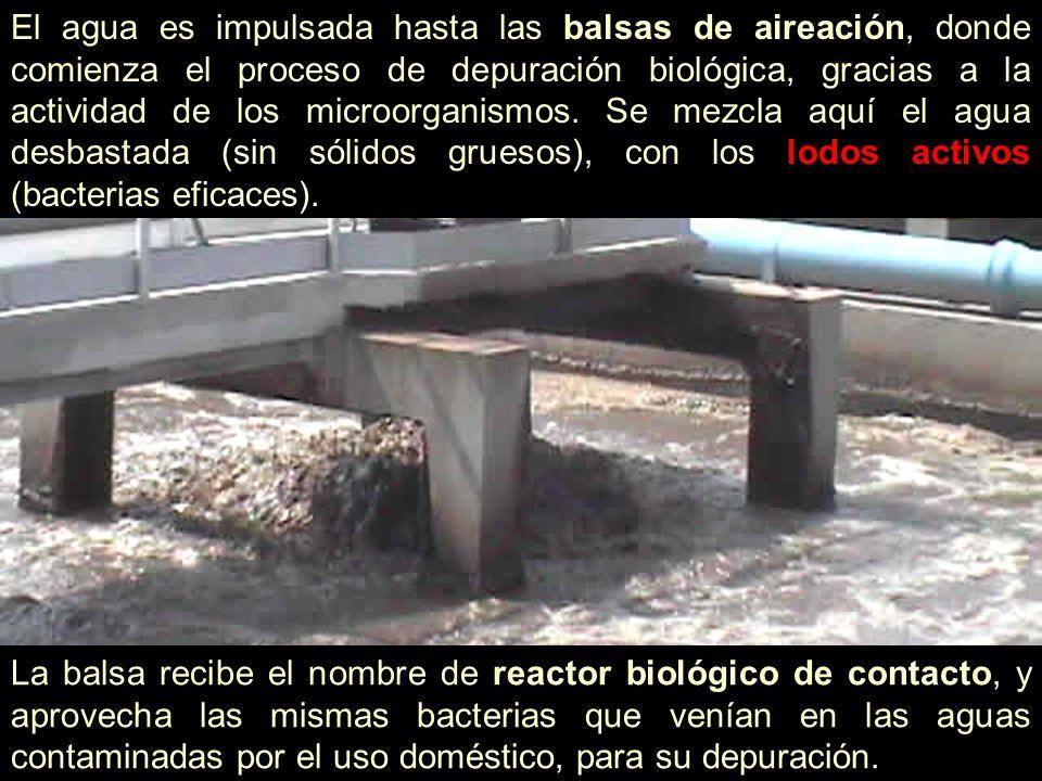 El agua es impulsada hasta las balsas de aireación, donde comienza el proceso de depuración biológica, gracias a la actividad de los microorganismos.