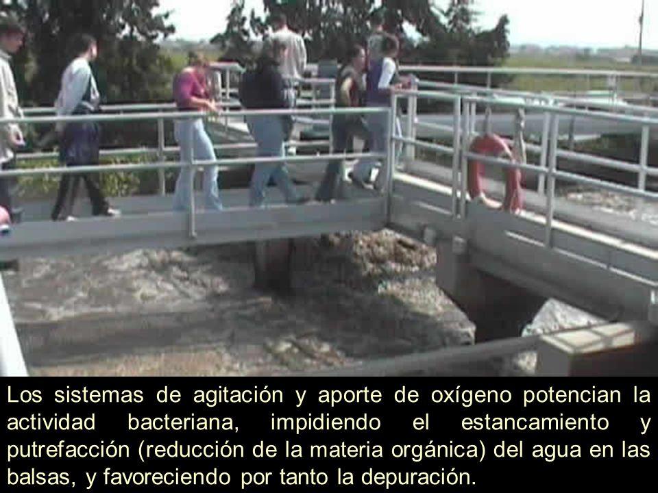 El agua pasa a la balsa de clarificación o decantación, donde se deja de agitar y se produce la sedimentación o decantación del fango, que se va al fondo.