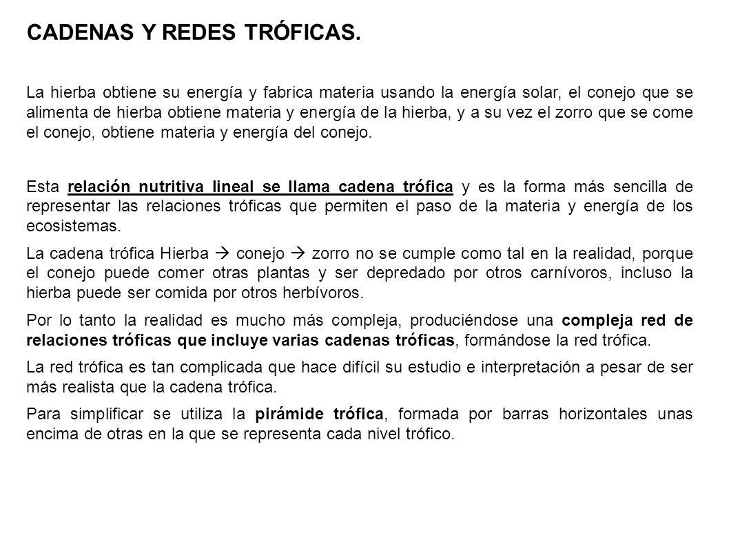 CADENAS Y REDES TRÓFICAS.