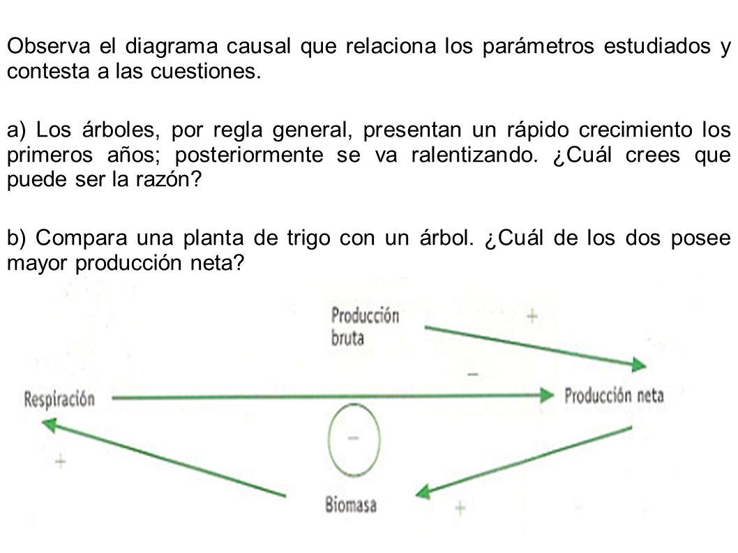 Observa el diagrama causal que relaciona los parámetros estudiados y contesta a las cuestiones. a) Los árboles, por regla general, presentan un rápido