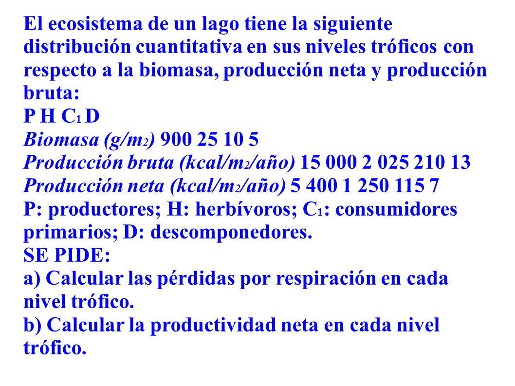 El ecosistema de un lago tiene la siguiente distribución cuantitativa en sus niveles tróficos con respecto a la biomasa, producción neta y producción bruta: P H C 1 D Biomasa (g/m 2 ) 900 25 10 5 Producción bruta (kcal/m 2 /año) 15 000 2 025 210 13 Producción neta (kcal/m 2 /año) 5 400 1 250 115 7 P: productores; H: herbívoros; C 1 : consumidores primarios; D: descomponedores.