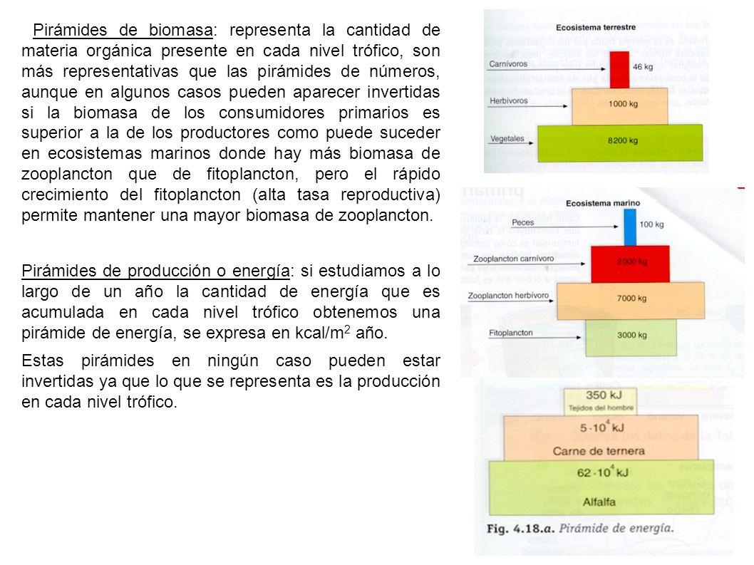 Pirámides de biomasa: representa la cantidad de materia orgánica presente en cada nivel trófico, son más representativas que las pirámides de números,