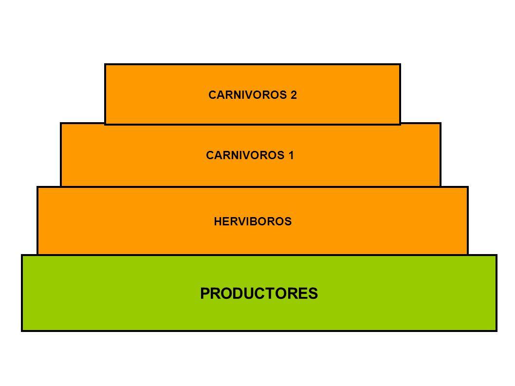 PRODUCTORES HERVIBOROS CARNIVOROS 1 CARNIVOROS 2