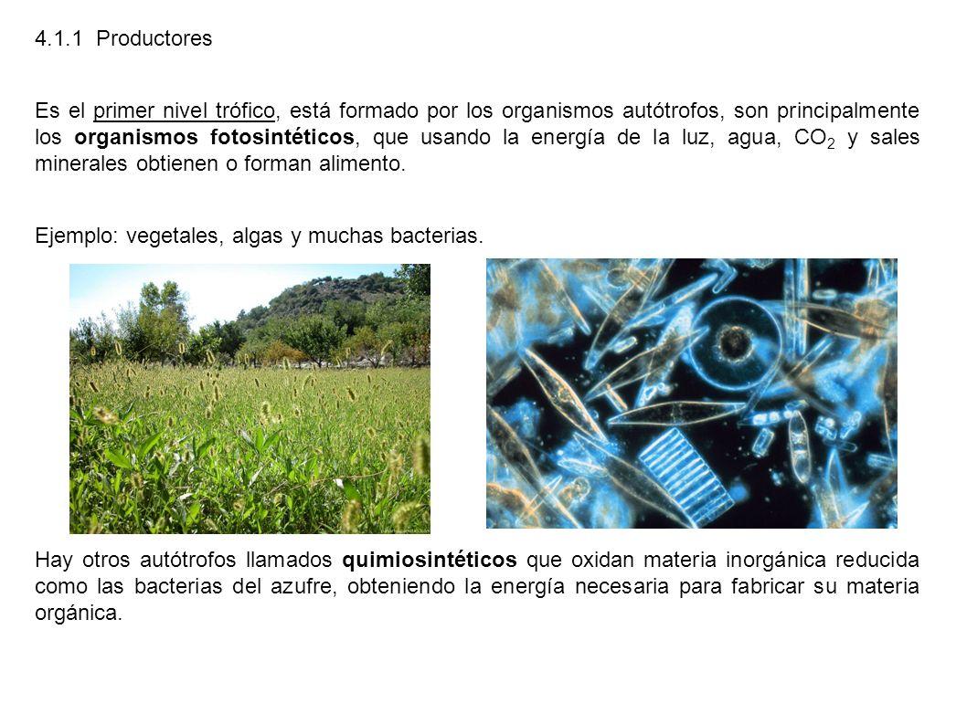 4.1.1 Productores Es el primer nivel trófico, está formado por los organismos autótrofos, son principalmente los organismos fotosintéticos, que usando