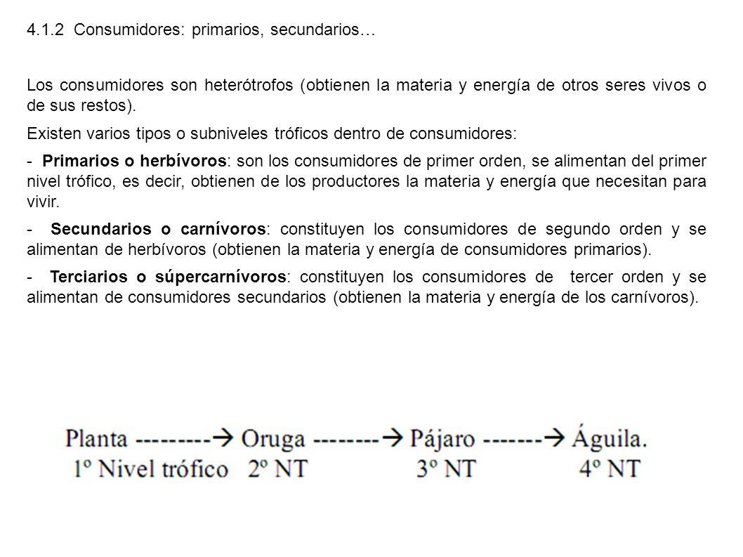4.1.2 Consumidores: primarios, secundarios… Los consumidores son heterótrofos (obtienen la materia y energía de otros seres vivos o de sus restos). Ex