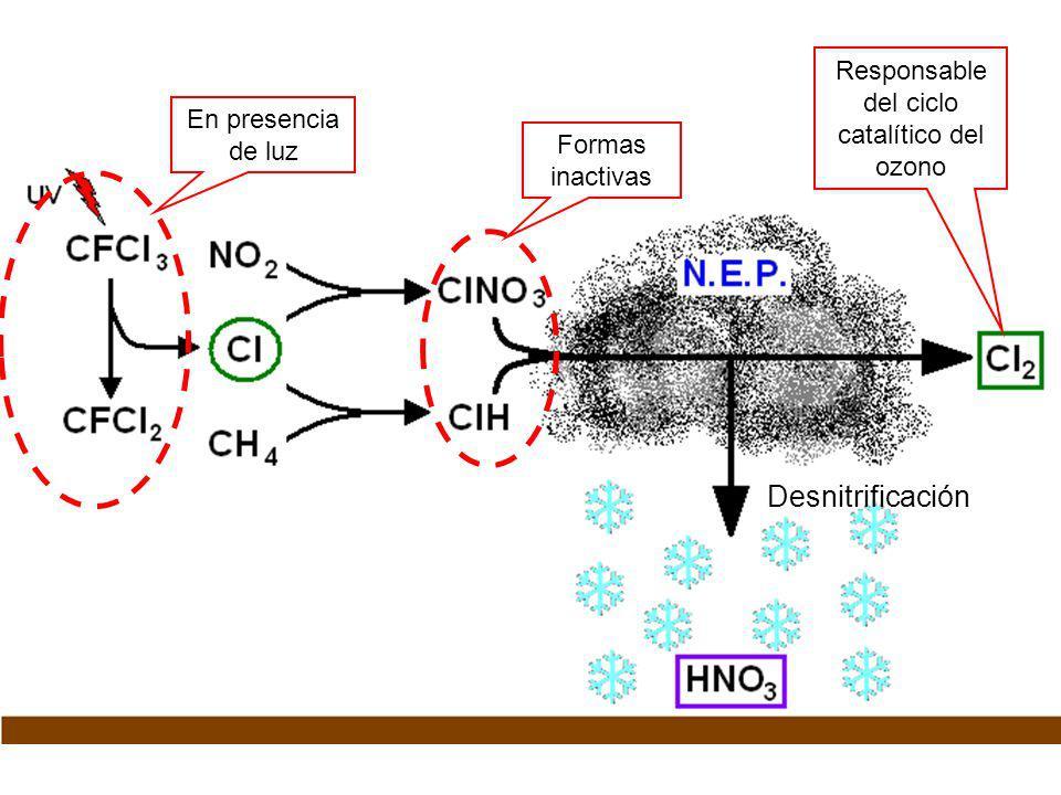 Formas inactivas En presencia de luz Desnitrificación Responsable del ciclo catalítico del ozono