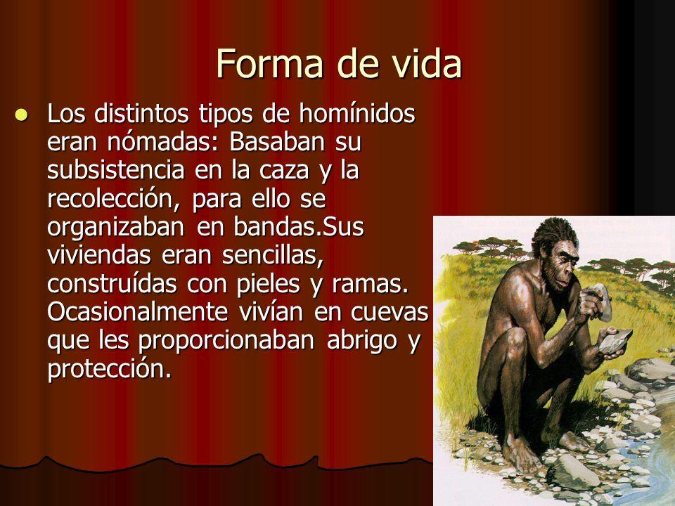 Forma de vida Los distintos tipos de homínidos eran nómadas: Basaban su subsistencia en la caza y la recolección, para ello se organizaban en bandas.Sus viviendas eran sencillas, construídas con pieles y ramas.