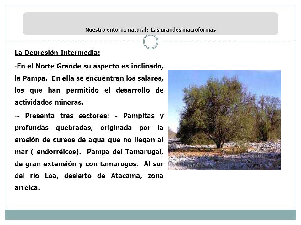 Nuestro entorno natural: Las grandes macroformas La Depresión Intermedia: - En el Norte Grande su aspecto es inclinado, la Pampa. En ella se encuentra