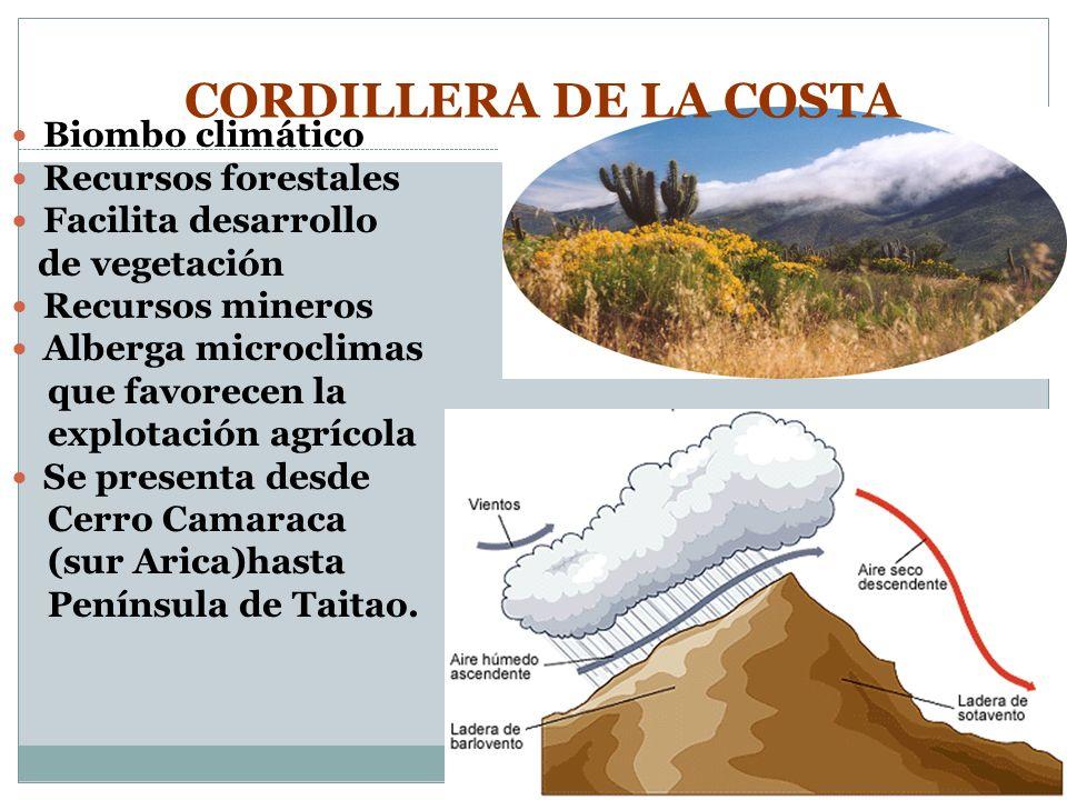 CORDILLERA DE LA COSTA Biombo climático Recursos forestales Facilita desarrollo de vegetación Recursos mineros Alberga microclimas que favorecen la ex