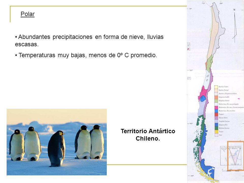 Polar Territorio Antártico Chileno. Abundantes precipitaciones en forma de nieve, lluvias escasas. Temperaturas muy bajas, menos de 0º C promedio.