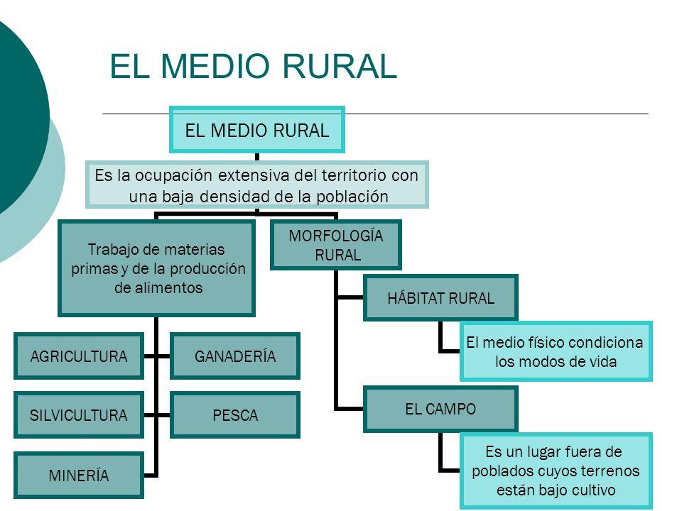 EL MEDIO RURAL Es la ocupación extensiva del territorio con una baja densidad de la población Trabajo de materias primas y de la producción de aliment