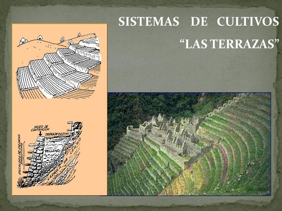 SISTEMAS DE CULTIVOS LAS TERRAZAS