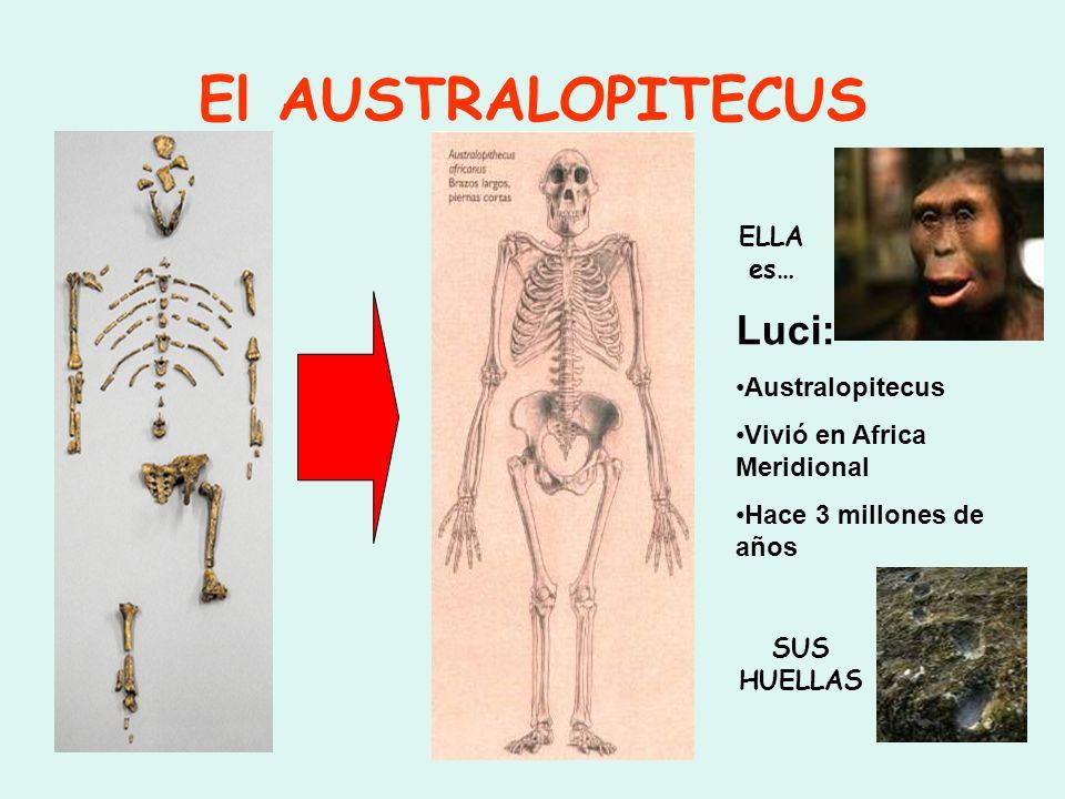 El AUSTRALOPITECUS ELLA es… SUS HUELLAS Luci: Australopitecus Vivió en Africa Meridional Hace 3 millones de años