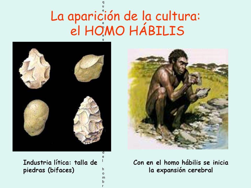 Arbol genealógico que representa la posible evolución del hombre. Arbol genealógico que representa la posible evolución del hombre. Arbol genealógico