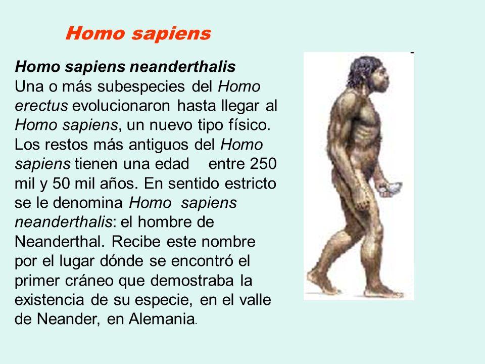 Homo sapiens neanderthalis Una o más subespecies del Homo erectus evolucionaron hasta llegar al Homo sapiens, un nuevo tipo físico. Los restos más ant