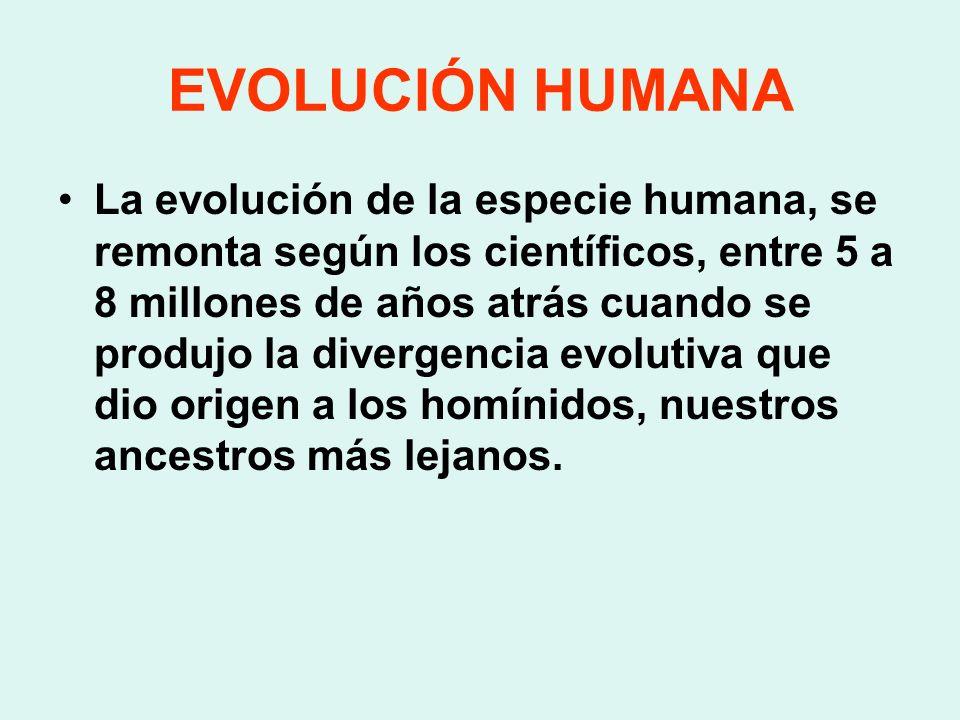EVOLUCIÓN HUMANA La evolución de la especie humana, se remonta según los científicos, entre 5 a 8 millones de años atrás cuando se produjo la divergen