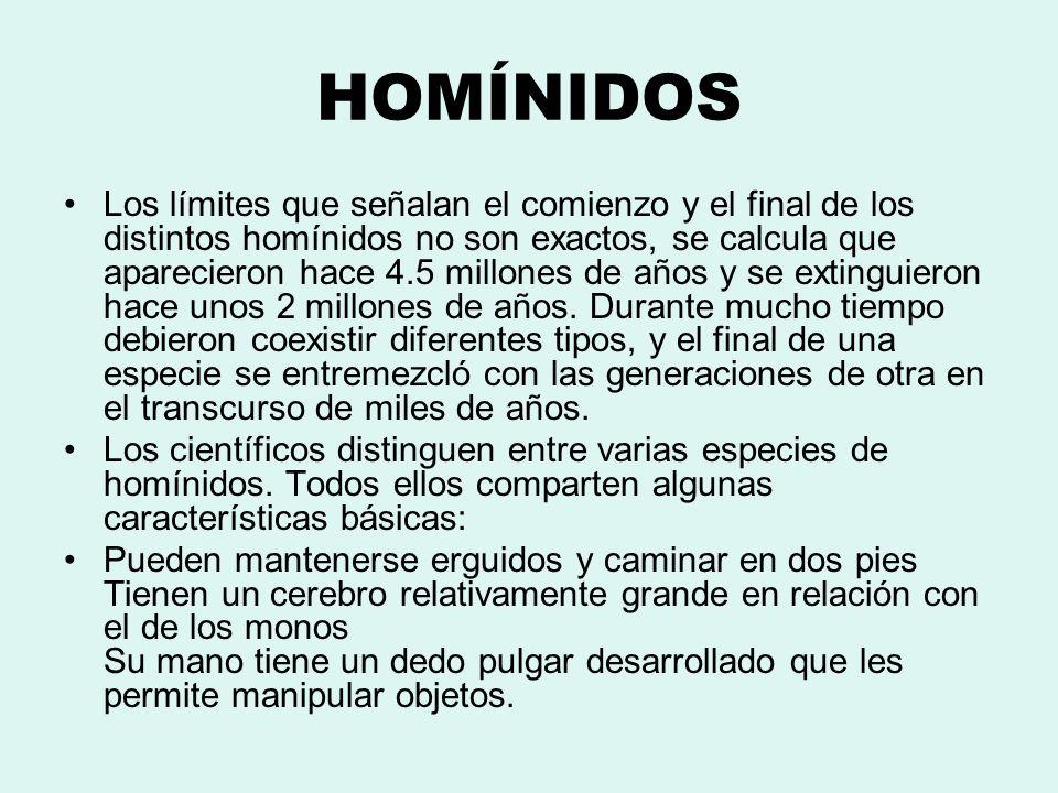 HOMÍNIDOS Los límites que señalan el comienzo y el final de los distintos homínidos no son exactos, se calcula que aparecieron hace 4.5 millones de añ