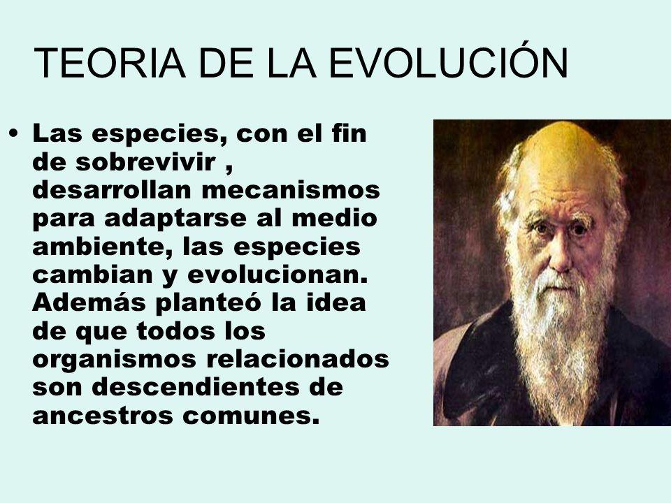 TEORIA DE LA EVOLUCIÓN Las especies, con el fin de sobrevivir, desarrollan mecanismos para adaptarse al medio ambiente, las especies cambian y evoluci