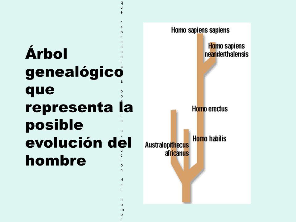 Arbol genealógico que representa la posible evolución del hombre. Arbol genealógico que representa la posible evolución del hombre. Árbol genealógico
