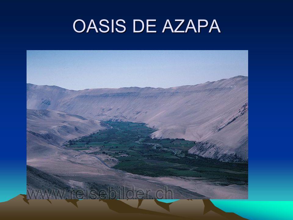 OASIS DE AZAPA
