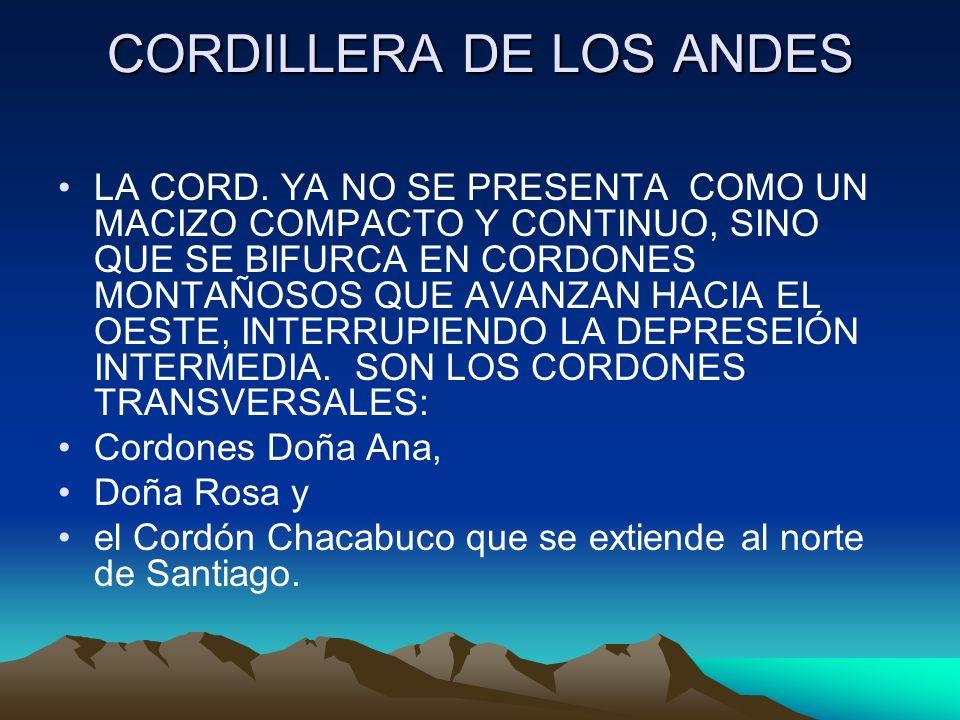 CORDILLERA DE LOS ANDES LA CORD. YA NO SE PRESENTA COMO UN MACIZO COMPACTO Y CONTINUO, SINO QUE SE BIFURCA EN CORDONES MONTAÑOSOS QUE AVANZAN HACIA EL